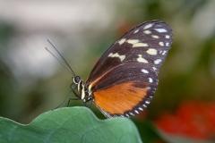 Papillons_103