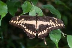 Papillons_107