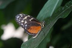 Papillons_112