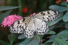 Papillons_113