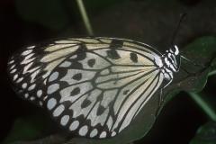 Papillons_202