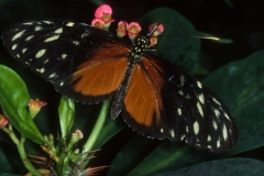 Papillons_204