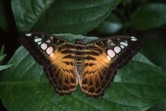 Papillons_208