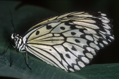 Papillons_210