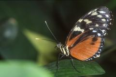 Papillons_213