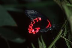 Papillons_214